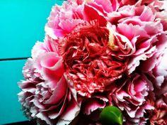 flores no #diadeflor www.musicaparavestir.com.br #musicaparavestir