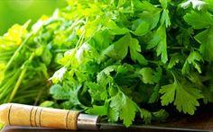 a cilantro 400 semillas cilantro coriandrum sativum herb hierbas Cilantro Benefits, Cilantro Herb, Herb Garden In Kitchen, Kitchen Herbs, Herbs For Health, Health Tips, Health Benefits, Gallo Pinto, Growing Lettuce