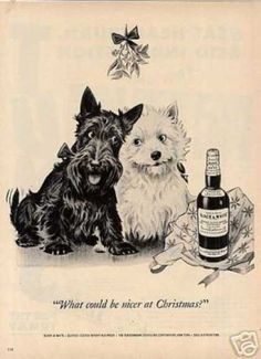 "Scottie and Westie- ""what could be nicer at Christmas?"""