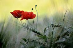 Nel campo di grano - (Explore)   Flickr - Photo Sharing!