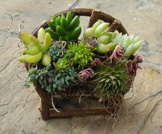 Sorry, just sold my last one. More available in mid March. Miniature succulent vine bench on Etsy, $15.00