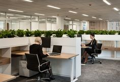Unispace has designed a new office space in Christchurch for New Zealand-based law firm Anderson Lloyd. Lounge Design, H Design, Open Office Design, Office Interior Design, Office Interiors, Workspace Design, Office Workspace, Bureau Open Space, Tiny House Furniture