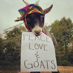 Peace,Love ,Goats