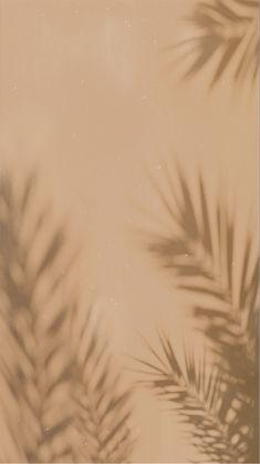 Boho Wallpaper Palm Leaf