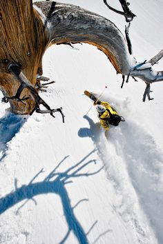 Solitude Resort, try Honeycomb Canyon...Best ski resort reviews of 2012-13 | Ski Resort Guide West | SKI Magazine