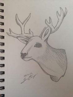 Quick drawing of a Deer Head