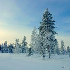 Joel | snowy trees | landscape + snow trees blue yellow green  ivory