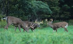 Attracting Deer to Your Property G5 Prime #G5Blog