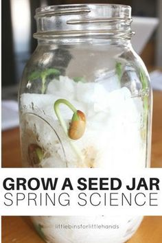 Set up this simple DIY seed jar for spring science this year! Watch as a seed grows into a plant and witness what happens underground as seeds sprout. Earth science and plant science for young kids. Easy seed jar to set up at home or in the classroom with preschool, kindergarten, and early elementary age kids. Easy kids science activity in a jar!
