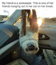 Sloth traveling in a car http://ift.tt/2mwbnSX