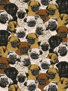 Social Pugz Framed Art Print by Huebucket | Society6
