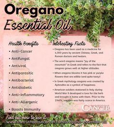 Oregano-Essential-Oil-Health-Benefits