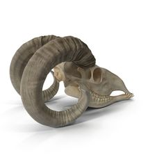Goat Skull Model available on Turbo Squid, the world's leading provider of digital models for visualization, films, television, and games. Vulture, Animal Skulls, Skeletons, Goats, Lion Sculpture, Aesthetics, Creatures, Statue, Model