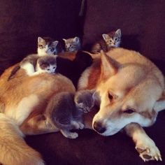 The look of defeat funny cute animals dogs cat cats adorable puppy animal kittens pets kitten funny quotes funny animals Cute Funny Animals, Funny Animal Pictures, Funny Cute, Cute Cats, Cute Pictures, Animal Pics, Funny Pics, Animal Memes, Funniest Animals