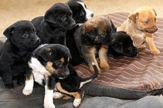 Puppies/babies