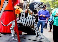 Perro, calaca, coyoacan, huesos, calavera, esqueleto, dia de muertos, Dog, calaca, bones, skull, skeleton, day of dead,