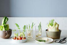 再生する野菜がかわいいすぎるリベポジで緑のある生活を