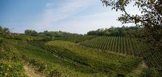 Stefano Milanesi, vini come vuole natura. E anche i Capricorno. - Persone - World Wine Passion