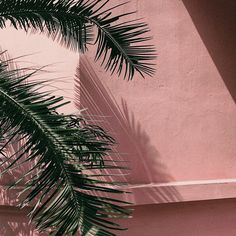 Palm trees and pink wall