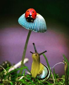 Snail and lady bug