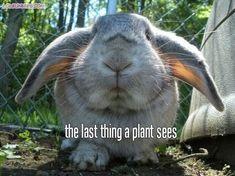 20 Funny Rabbit Memes