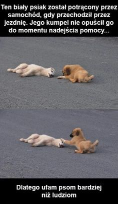 I love dogs. - Funny pictures and memes of dogs doing and implying things. If you thought you couldn't possible love dogs anymore, this might prove you wrong. Animals And Pets, Baby Animals, Funny Animals, Cute Animals, I Love Dogs, Puppy Love, Cute Dogs, White Puppies, Dogs And Puppies