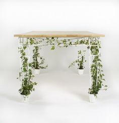 Plant, Grow and Eat Your Dinner via 'Plantable' Table (1)