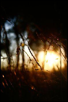morning light..