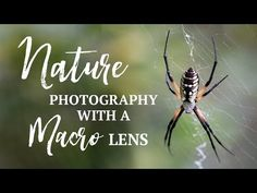 On a recent photo walk I came across a huge spider, a couple of snakes and several other interesting subjects to photograph. In this video I share some footage from the day and photographs I took with a 100mm macro lens and my iPhone and Moment macro lens. Although these species are all common in […] Hipster Photography, Mixed Media Photography, Still Life Photography, Artistic Photography, Beach Photography, Photography Business, Vintage Photography, Creative Photography, Nature Photography