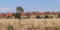 Photo guide to Australian geckos - WQ sandhills