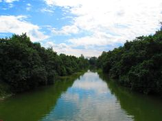 A little unnamed stream in the Punggol Park.