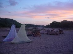 Fly camping safaris with camels are available at Sarara Camp