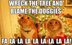 Wreck the tree and blame the doggies. Fa la la la la la la la la! #catoftheday