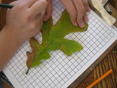 Measurement - Measuring leaves on graph paper would be a good activity to not only measure width and the height, but also to measure area and the perimeter of the leaf. (Or other object.)