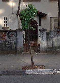 Sobrado – Avenida Angélica, 955 / Crédito: Douglas Nascimento / São Paulo Antiga