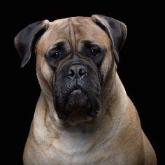 La personnalité de chiens et chats captée avec brio par un talentueux photographe