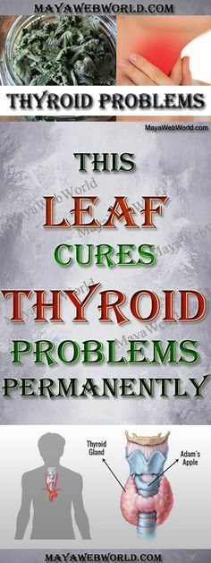 This Leaf Cures Thyroid Problems Permanently! – MayaWebWorld
