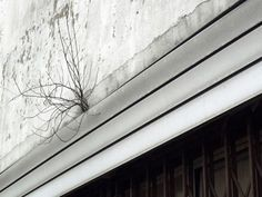 Jo, photo - street view - poésie urbaine