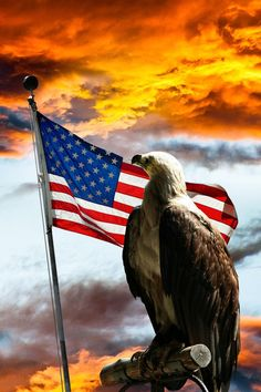 America The Beautiful May she turn back to God. Wrong eagle but long may the American flag fly. I Love America, God Bless America, America America, Hello America, My Champion, Let Freedom Ring, Home Of The Brave, Land Of The Free, Old Glory