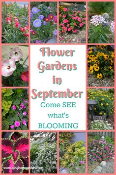 Gardening Flowers Flower Gardens in September - Hello there, gardening friends, I'm go glad you're joining me today for a little virtual garden tour of my Flower Gardens in September. Growing Flowers, Planting Flowers, Flower Gardening, Gardening Tips, Planting Plants, Shade Garden, Garden Plants, Flower Garden Design, Flower Landscape