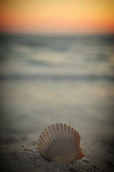 My New Friend Mr Sand Crab Panama City Beach Fl Seashells