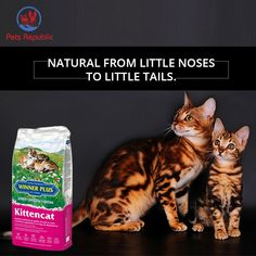 WINNER PLUS Kittencat is a highly energetic feed, enriched with proteins, ideal for kittens during every stage of their growth and suitable for females during gestation and nursing period. The tasty, easily digestible and nourishing formula of selected raw materials, such as high-quality chicken meat, guarantees healthy and balanced nutrition during growth with the best acceptance. Dog Food Online, Flora Intestinal, Plant Fibres, Meat Chickens, Raw Materials, Cat Gif, Cat Food, Cool Cats, Cats And Kittens