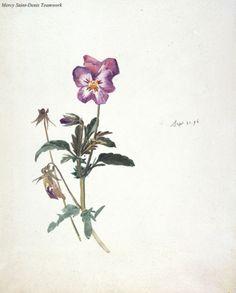 Flower by Beatrix Potter.