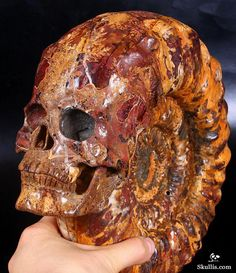 "Stunning 9.6"" Ammonite Fossil Carved Crystal Skull"
