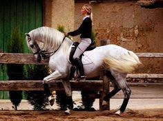 it'd be nice to do some dressage training at the Spanish School in Austria