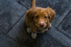 Violeta, She is a good girl.