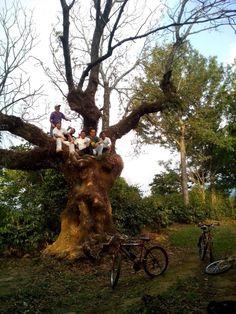 Tour de bicicleta con los amigos