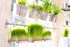Calhas IKEA em aço inoxidável fixados ao longo de uma janela com recipientes com ervas de trigo.