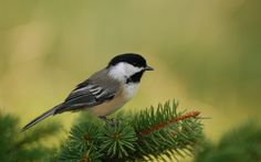 bird HD: 26 thousand results found on Yandex.Images