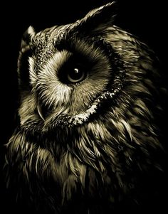 face black & white photography | Amazing owl | Fox and Owl Fascination | Pinterest